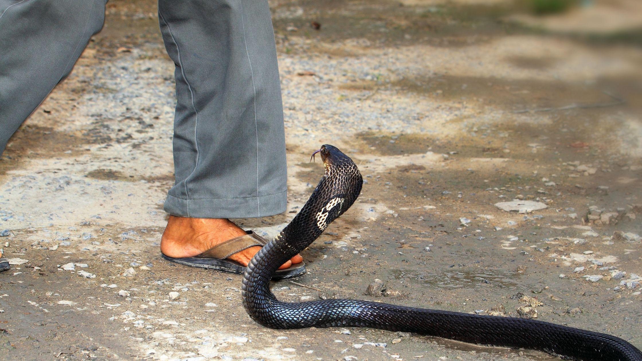 arti-mimpi-digigit-ular