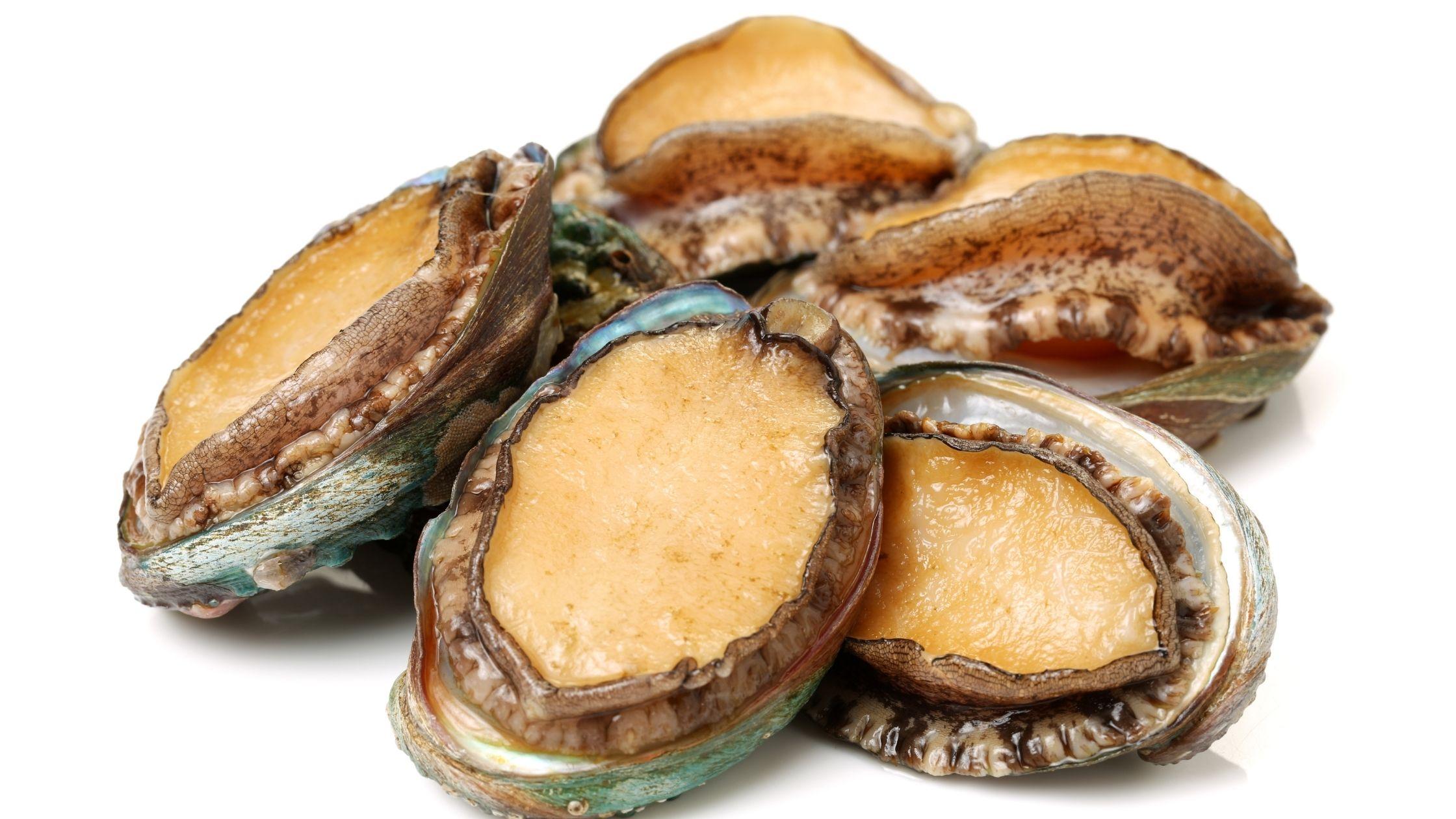 apa-itu-abalone